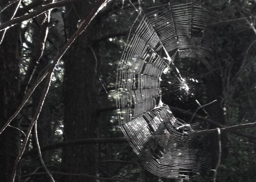BW Spider Web